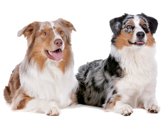 privetraining-honden