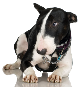 gedragstest-hond-1