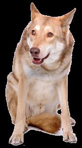 gedragstest-hond-02