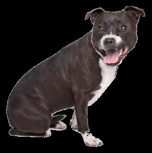 gedragstherapie-hond-1