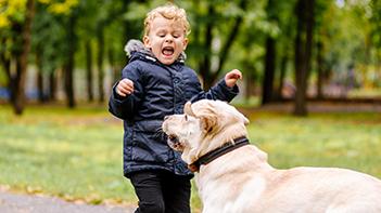 angst voor honden overview