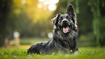 Training volwassen hond