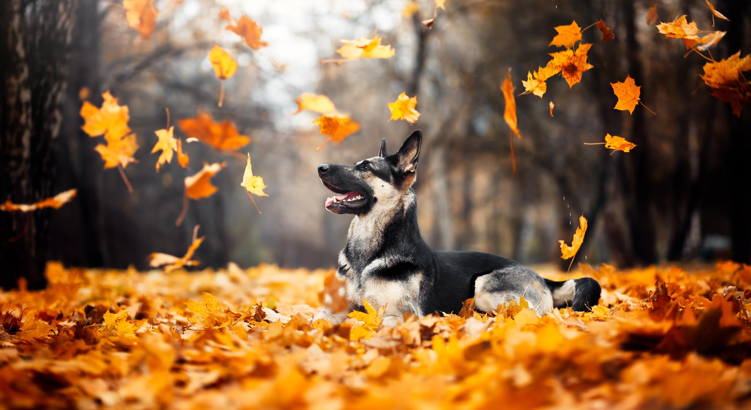 slider home herfst